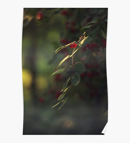 Berries on a Tree Poster