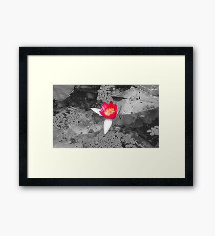 Lily in the Darkness Framed Print