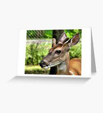 Velvet Antlers-2 Greeting Card