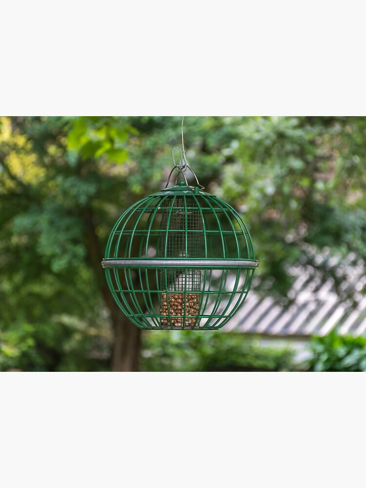 Bird feeder up close by tdphotogifts