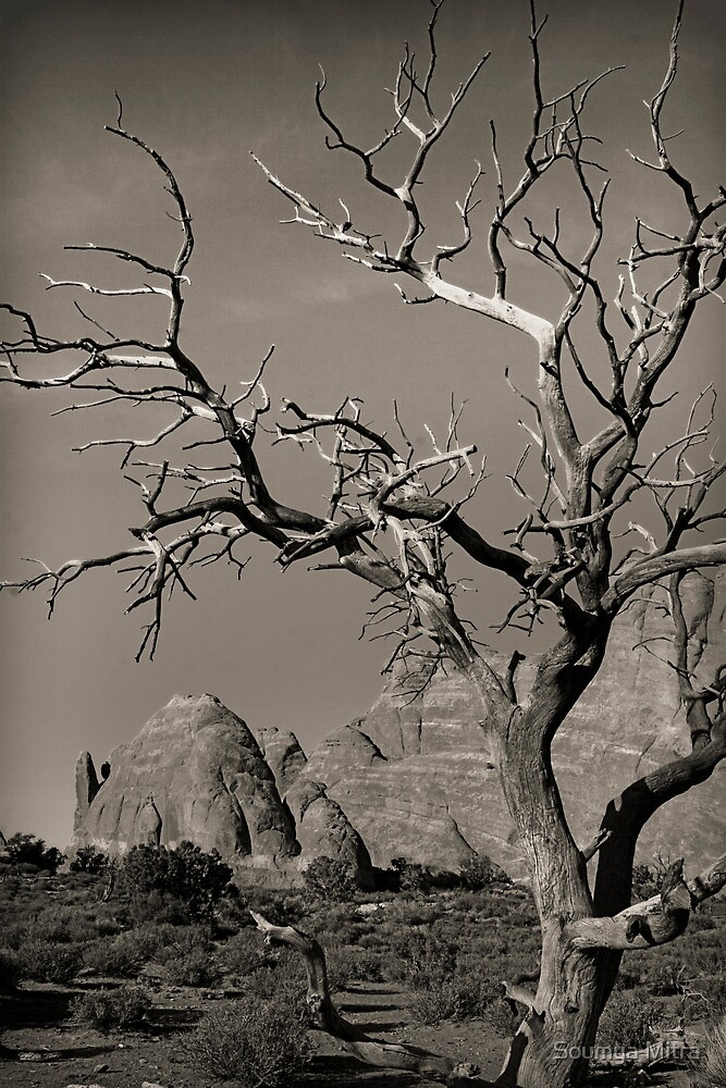 Dead tree at Arches NP, Utah by Soumya Mitra