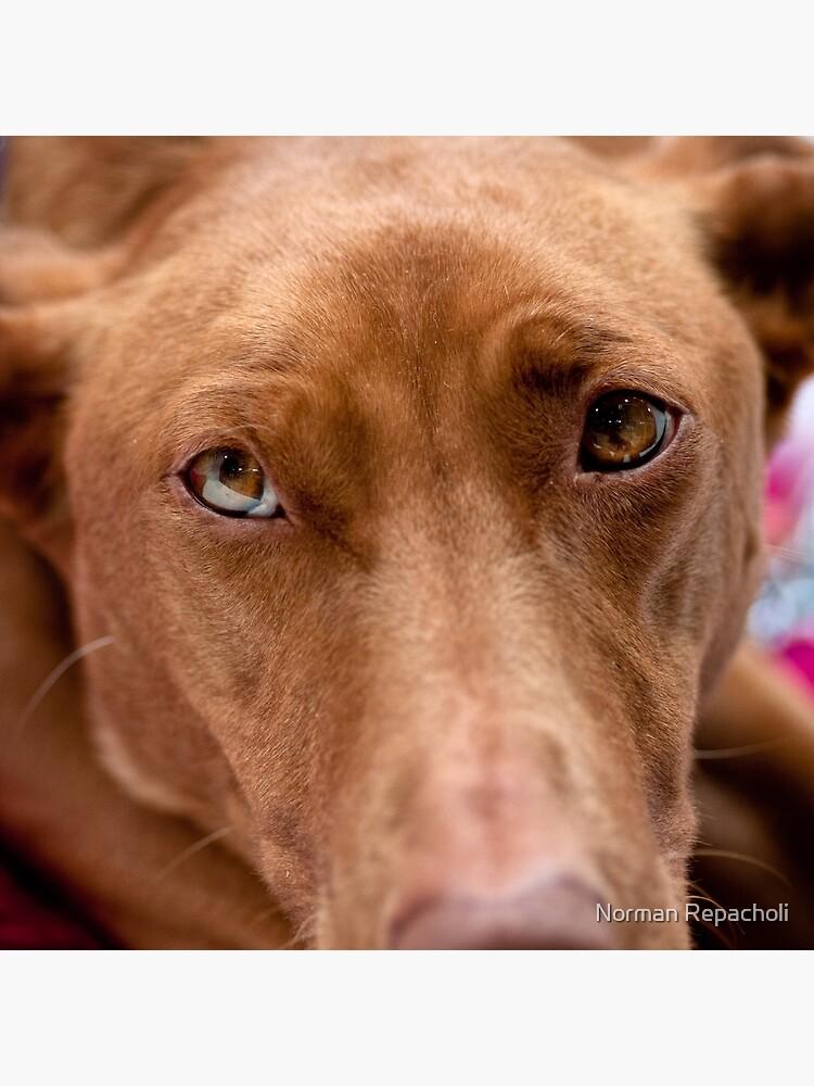 A pharoah's gaze by keystone