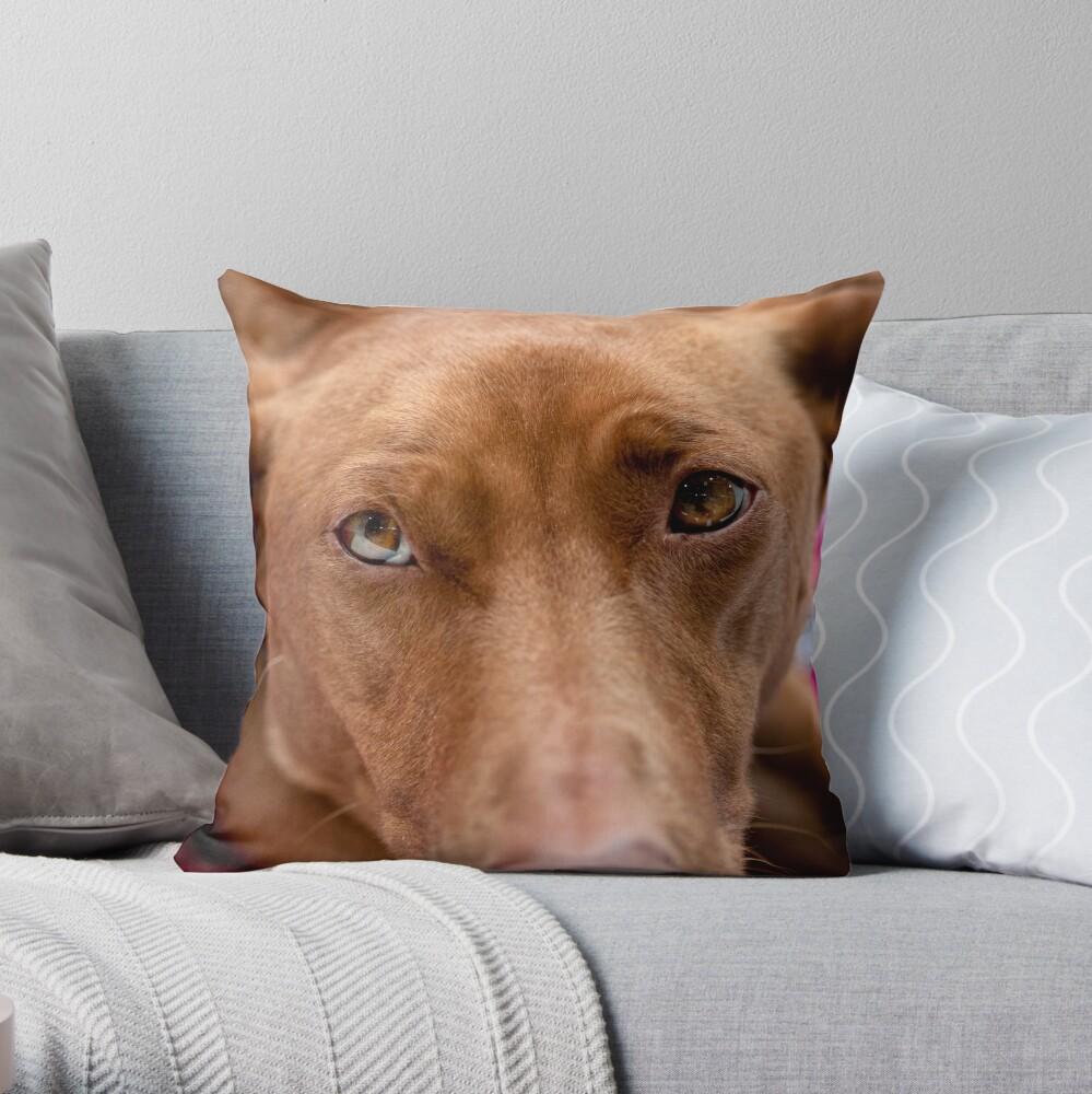 A pharoah's gaze Throw Pillow