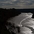 By the light.................. by Dave  Hartley