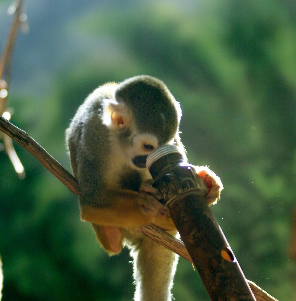 monkey see by skycat