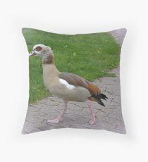 Egyptian Goose. Dekokissen