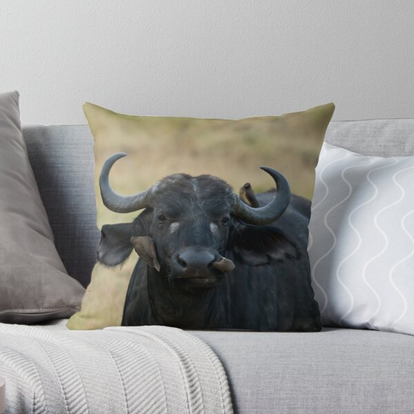 African Buffalo being cleaned by oxpeckers Throw Pillow