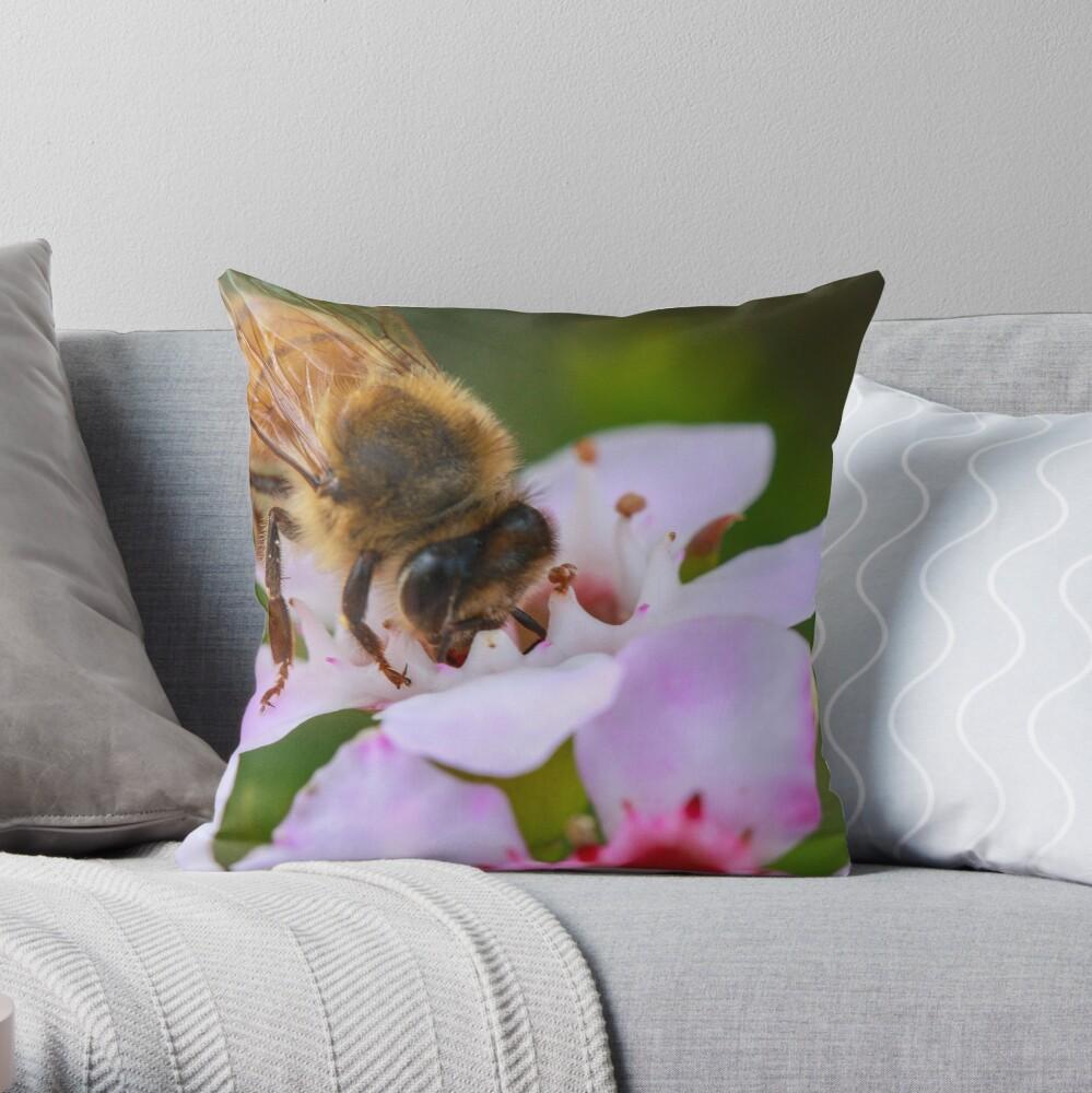Bee on Geraldton Wax Throw Pillow