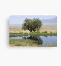 Reflections in an Oasis Canvas Print