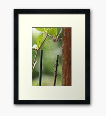 Vine and Wire Framed Print