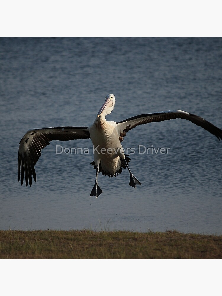 Coming in for a landing... by Keyverse