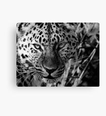 Leopard in Black and White Canvas Print