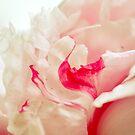 Ruffles and Cream by Susana Weber