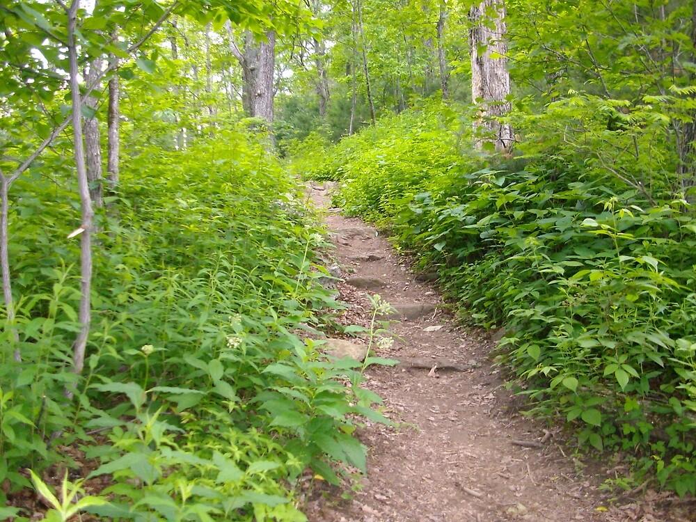 Wooded Path by tneldreth