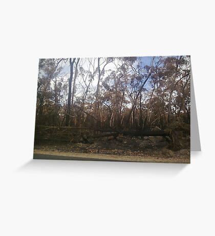 Woodside ~ Black Saturday Greeting Card