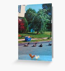 I don't care if that quack did say you were chicken!  If you go over there, you'll just be a sitting duck!! Greeting Card