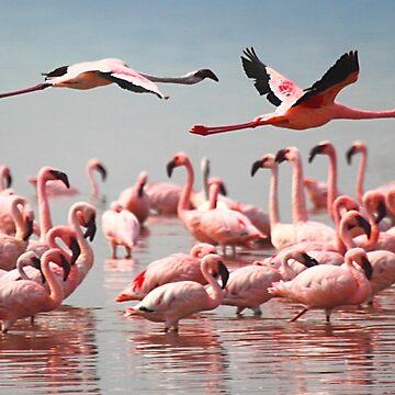 Fly Past, Lesser Flamingos, Lake Nakuru, Kenya by Carole-Anne