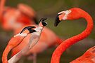 Flamingos by Val Saxby