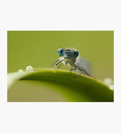 Big blue eyes Photographic Print