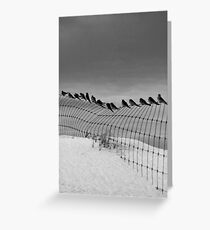 Birds on a Wire,Great Ocean Road. Greeting Card