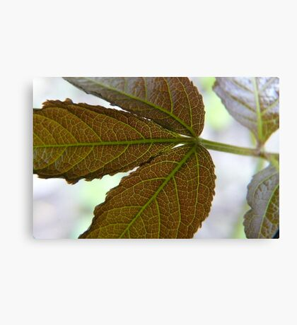 Leaf X-ray,...See My Veins Canvas Print