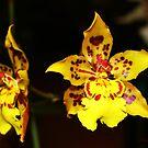 Yellow by Mattie Bryant