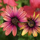 Warm Petals by RodriguezArts