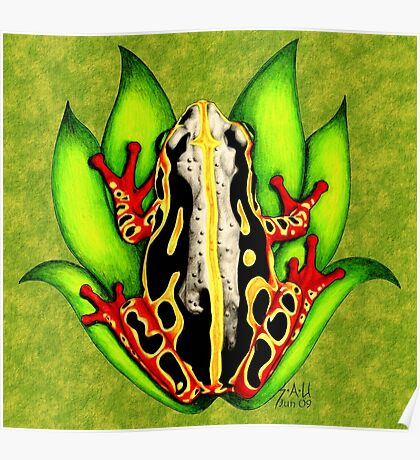 Black and Red Tree Frog Poster