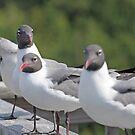 Seagulls by Karl R. Martin