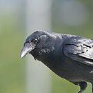 Crow by Karl R. Martin