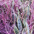 The Pink, Pink Grass Of Home by PhoenixArt