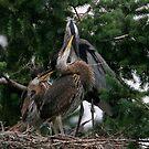 Loving Peck by Martin Smart
