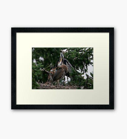 Loving Peck Framed Print