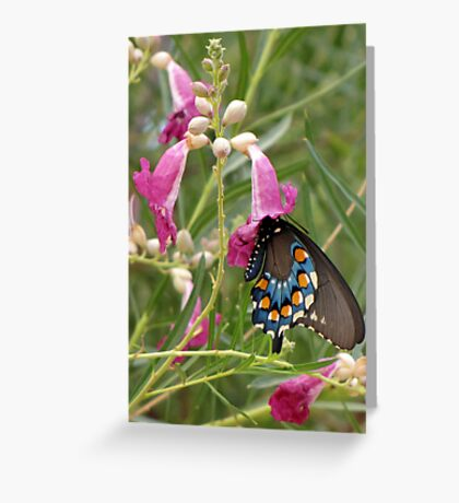 Butterfly ~ Pipevine Swallowtail Greeting Card