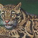 Clouded Leopard #3 by artbyakiko