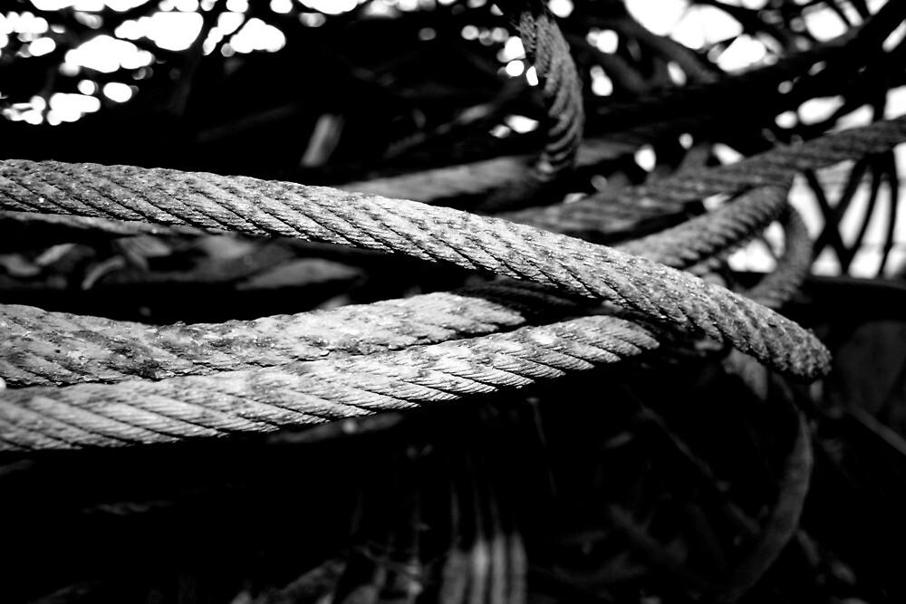 Tangled by MissRaWr