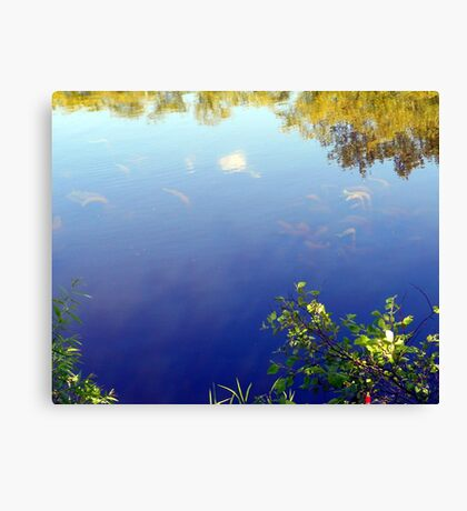 Life in the Lake Canvas Print