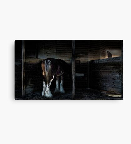 in the stalls Canvas Print