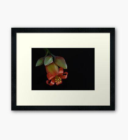 'Pink Trumpet' Framed Print
