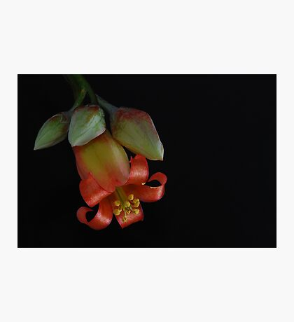 'Pink Trumpet' Photographic Print