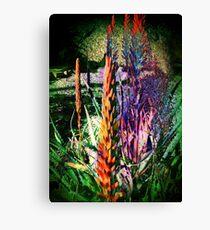 3649 Aloe Canvas Print