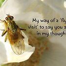 Flying Visit greeting card by sarnia2