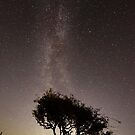 Milky Way and Hawthorn Tree by Jonathan Maddock