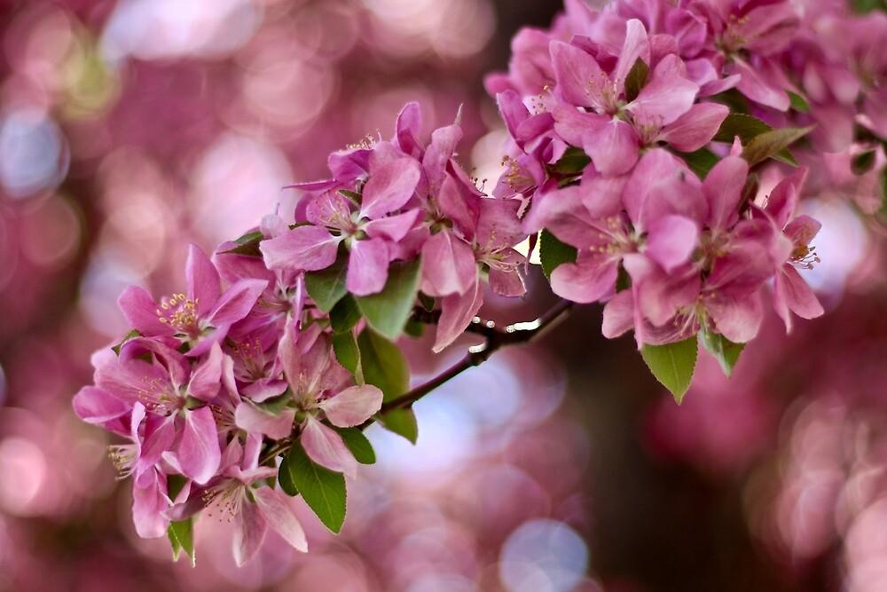 Spring Dream by quantumnatura