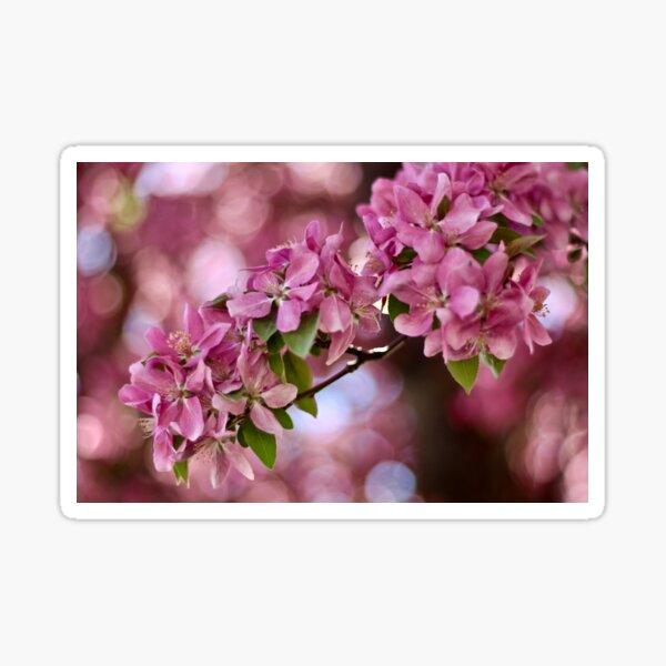 Spring Dream Sticker