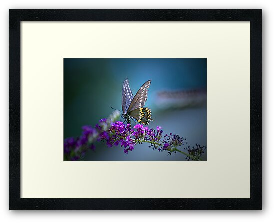 A butterfly's calling me . . . by Bonnie T.  Barry