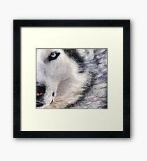 wolf brush Framed Print