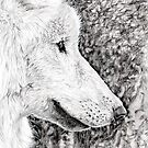 Wolf Portrait by Hannah Taylor