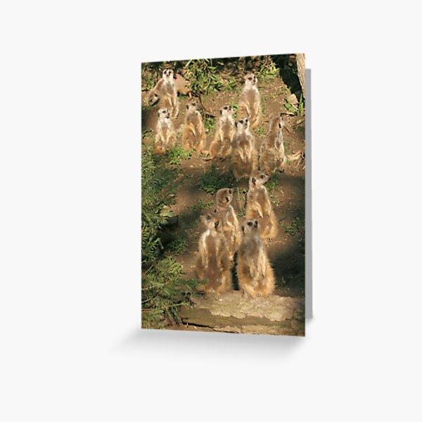 Meerkats of Oakland Zoo Greeting Card