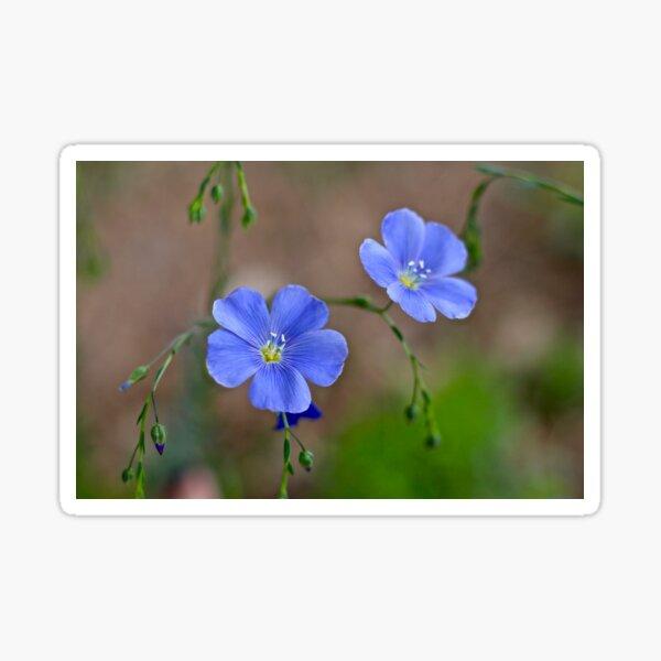 Flax Blossoms  Sticker